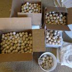 Serendipity Outpost wooden balls.